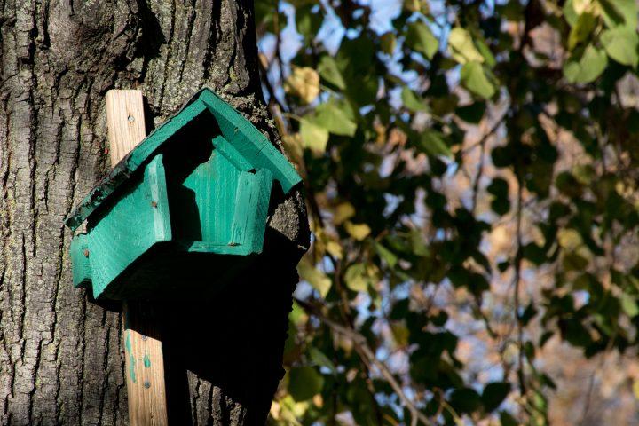Un nichoir installé par la Ligue de Protection des Oiseaux